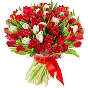 Букет-101-тюльпанов-микс-красных-и-белых