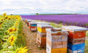пасіка бджоли