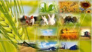 сільське господарство кооператив