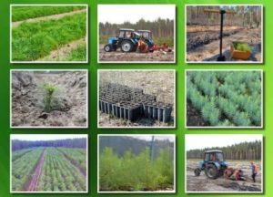 Лісокультурна-кампанія-2021